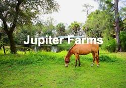Jupiter Farms Martin Group Luxury Homes For Sale FLPalmBeach.com