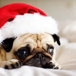 Petsmart Santa Pictures with Your Pet – Santa Paws Howliday Event December 12th -13th & 19th – 20th 2015