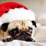 Petsmart Pictures Santa Pet